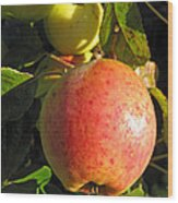 An Apple After Frost Wood Print