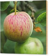 An Apple - Featured 3 Wood Print