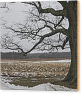 An Appleton Tree And Field In Winter Wood Print