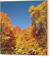 An Autumn Of Gold Wood Print