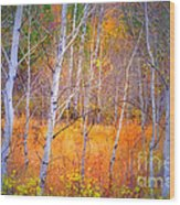 An Autumn Symphony Of Colour Wood Print