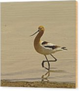 An Avocet Wading The Shore Wood Print