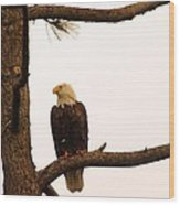 An Eagle Day Dreaming Wood Print
