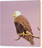 An Eagle Hanging Out Wood Print