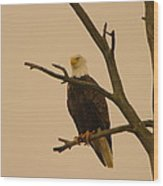 An Eagle In An Old Snag Wood Print