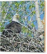 An Eagle In Its Nest  Wood Print