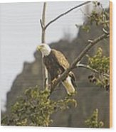 An Eagle In The Spring Wood Print