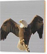 An Eagle Posing  Wood Print