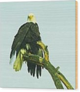 An Eagle Shaking It Off Wood Print