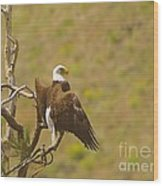 An Eagle Stretching Its Wings Wood Print