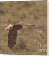 An Eagle Turns  Wood Print
