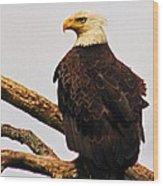 An Eagle's Perch Wood Print