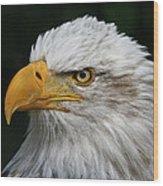 An Eagle's Portrait Wood Print