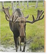 An Elk Standing In A Puddle Of Water Wood Print by Doug Lindstrand