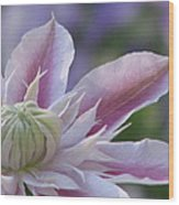 An Exotic Clematis Wood Print