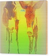 Donkey Mother And Son On An Extremely Hot Day  Wood Print