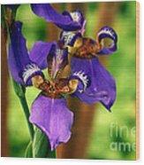 An Eyeful Iris Wood Print