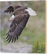 An Female Eagle Flys Protectively Over Wood Print
