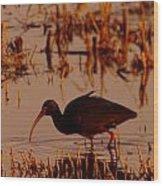 An Ibis Feeding Wood Print