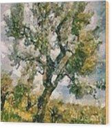 An Old Olive Grove Wood Print
