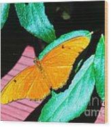 An Orange Butterfly Wood Print