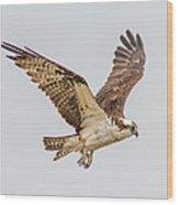 An Osprey Wood Print