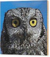 An Owl Wood Print