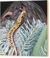 An Uncommon Garter Snake Wood Print
