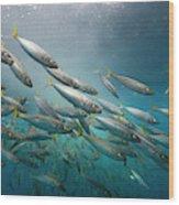 An Underwater View Of Schooling Fish Wood Print