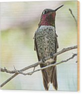 Ana Hummingbird Wood Print
