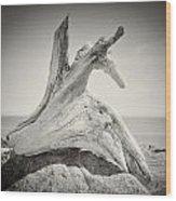 Analog Photography - Driftwood Wood Print