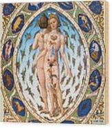 Anatomical Man Wood Print