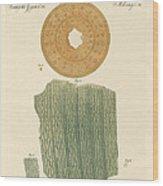 Anatomy Of A Straw Wood Print