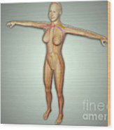 Anatomy Of Female Body With Arteries Wood Print