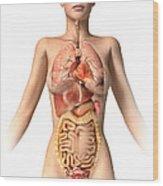 Anatomy Of Female Body With Internal Wood Print