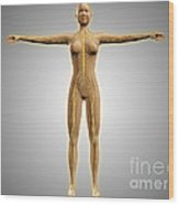 Anatomy Of Female Body With Nervous Wood Print