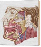 Anatomy Of Human Salivary Glands Wood Print