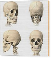 Anatomy Of Human Skull From Different Wood Print
