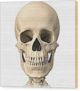 Anatomy Of Human Skull, Front View Wood Print