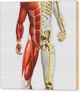 Anatomy Of Male Body With Half Skeleton Wood Print