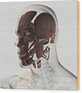 Anatomy Of Male Facial Muscles, Side Wood Print