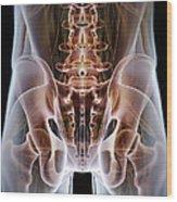 Anatomy Of The Hip Bones Wood Print