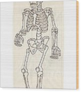 Anatomy Scrolls - Front Wood Print