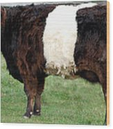 Ancient Breed Belted Galloway Wood Print
