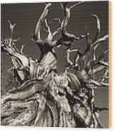 Ancient Bristlecone Pine In Black And White Wood Print