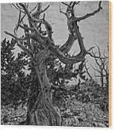 Ancient Bristlecone Pine Wood Print