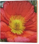 Ancient Flower 4 - Poppy Wood Print