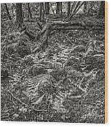 Ancient Grove Wood Print