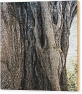 Ancient Old Fine Olive Tree 6 Mountain Spain  Wood Print
