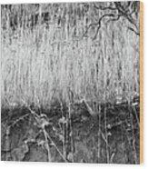 Ancient Sagebrush 2 Wood Print